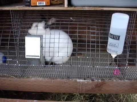 Backyard rabbitry. Raising meat rabbits. - YouTube
