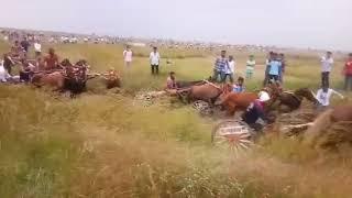 Funny Horse Race || ghodagadi shryat || Horse race in village
