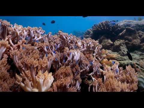 Rolling in the Deep - Mabini - 4k - Canon 1dx Mark II Underwater