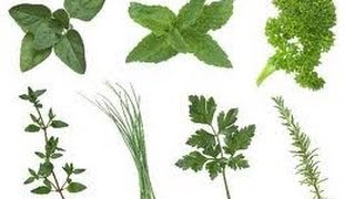 How To Save Fresh Herbs - Quick Tip (#220)