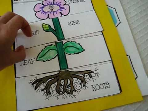 Grade 1 Science Parts Of Plant Activities And Games