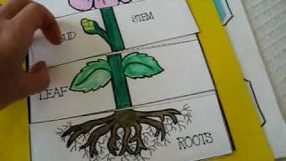 Grade 1 - Science: Parts of plant activities and games. roots. leaf. bud. stem.petals and flowers.