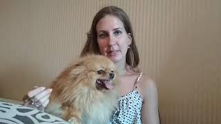 Надо ли стерилизовать собаку мелкой породы ?