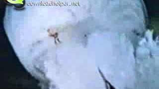Медузы (Кишечнополостные)