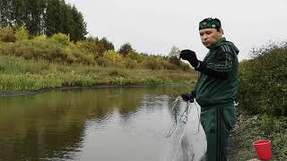 Рыбалка кастинговой сетью на пруду в Липецкой области
