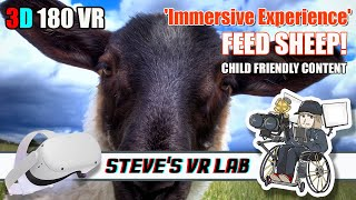 3D 180VR Visiting a sheep Farm in Hokkaido! This could be interesting for kids using a headset