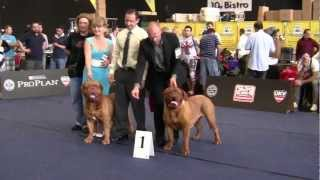 World Dog Show 2012 - (salzburg Austria) - Dogue De Bordeaux