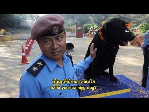 Spirit of Asia : Animal Worshipping feast in Nepal