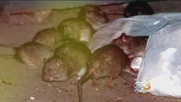 Research: Philadelphia Worst In Country For Rodent Infestations