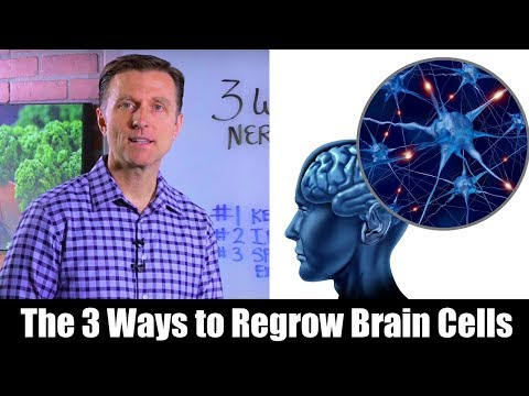 Renew & protect Your Brain Cells (Neurogenesis)