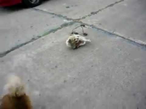 Carritos para perros invalidos youtube for Carritos para perros