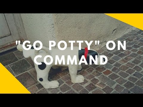 Teaching Your Dog to 'Go Pee' on Command
