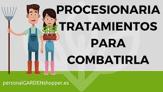 oruga procesionaria del pino guía de tratamientos