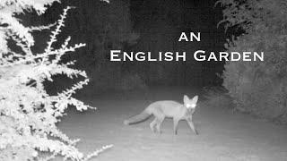 An English Garden: A Year of Wildlife