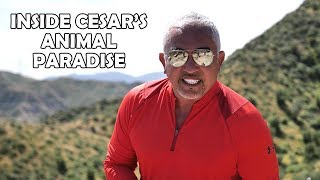 What Cesar Millan's Ranch Is Really Like