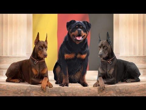10 LEGENDARY GERMAN DOG BREEDS