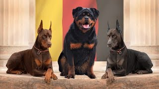 10 LEGENDARY GERMAN DOG BREEDS
