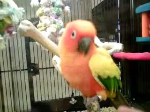 Pictures Of Petsmart Birds Kidskunstinfo