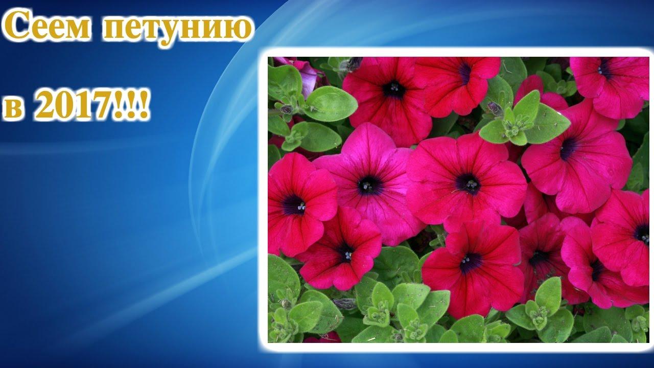 Интернет-магазин treez collection. Искусственные цветы, деревья оптом. Самая большая коллекция искусственных растений в москве, с доставкой по всей россии.