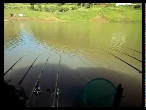 Pescando Tilápias Gigantes em Paraibuna - Parte 5