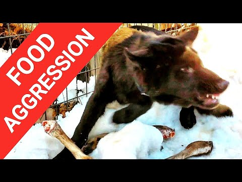 food-aggression-in-dogs---how-to-make-dogs-safe-for-children