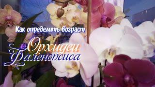 как определить возраст орхидеи.Срок жизни фаленопсиса