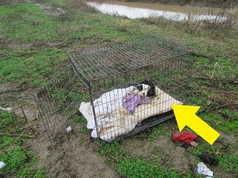 Rescuers Got A Call About A Puppy Who'd Been Abandoned And Left To Freeze Locked In A Cage