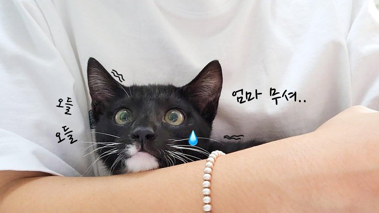 병원 갔더니 집사 품에만 찰싹 붙어있는 껌딱지 아기고양이