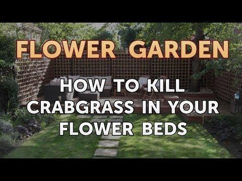 Crabgr In Your Flower Beds