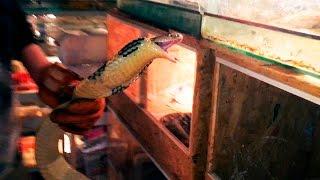 НЕОЖИДАННЫЙ ПОБЕГ БОЛЬШОЙ КОБРЫ. Работа с ядовитыми змеями