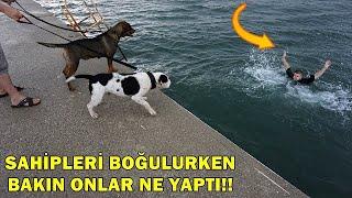 Deniz'de Sahibinin Boğulduğunu Gören Köpekler Denize Atlamaya Çalıştılar!!