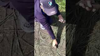Рыбалка на карпа сома карася Первый выезд после запрета Глубокий турунчук