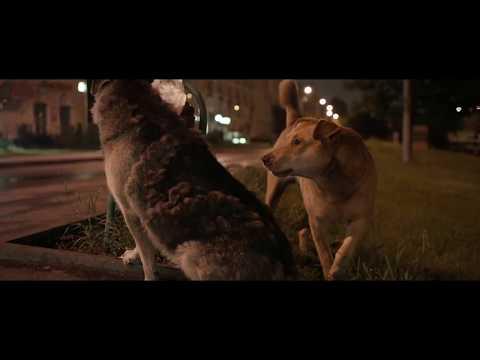 SPACE DOGS By Elsa Kremser & Levin Peter | Trailer | GeoMovies