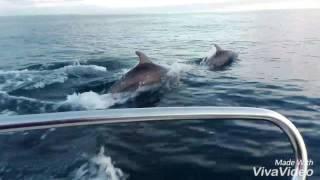 Дельфины. Сочи. Февраль 2017