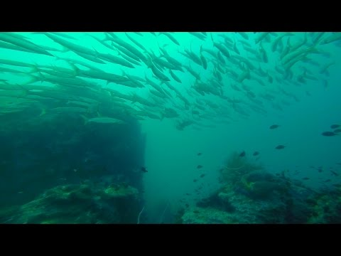 Koh Tao PADI Advanced Open Water Diving — March, 10 2016