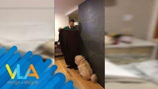 ¡Pato, Ricardo y Vanessa intentaron engañar a sus perros! | Venga la Alegría