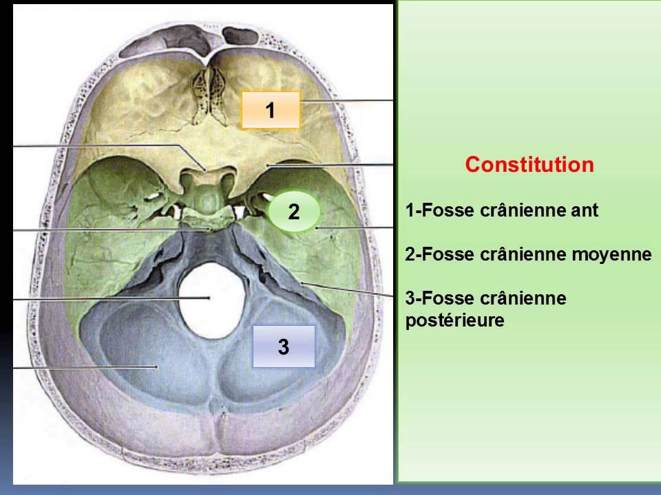 ANATOMIE MS Ostéologie de la base du crâne - YouTube