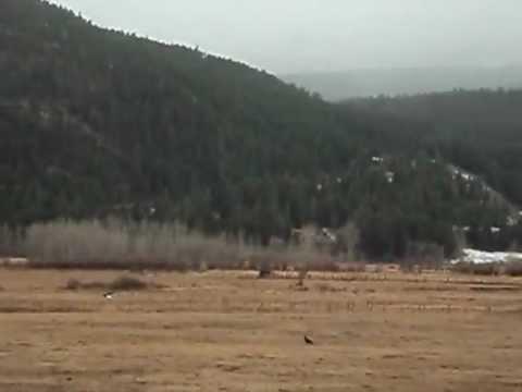 Eagles in Springs  - Nlakapamux Nation.wmv