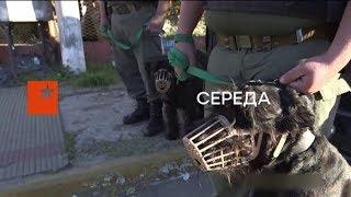 Цивилизованный мир объявил войну российской наркомафии - Секретный фронт