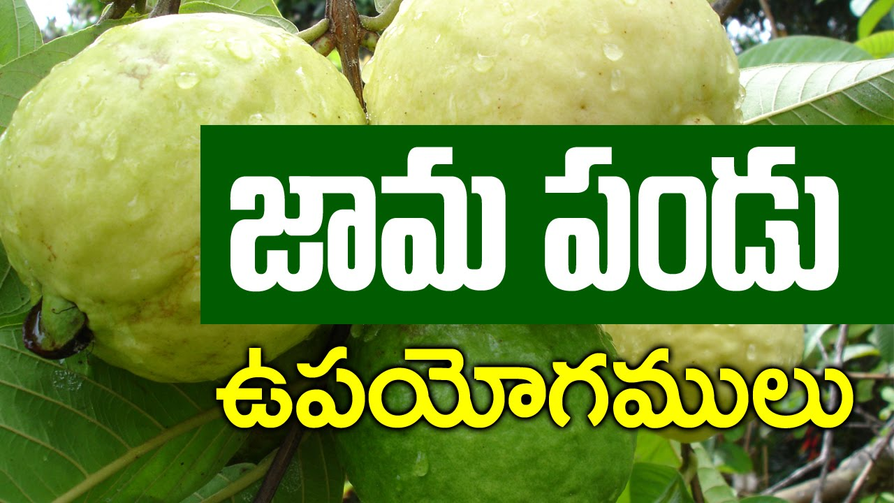Top beauty and nutrition benefits of guava