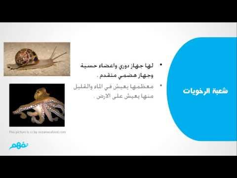 مملكة الحيوان - أحياء - أولى ثانوى - موقع نفهم