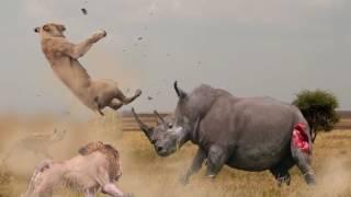 Видео не для слабонервных.Битвы животных.