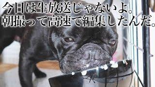 【フレンチブルドッグココ展】 2019.5/7〜5/12 11:00〜20:00 渋谷のギャ...
