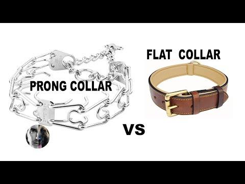 Prong Collar Vs Flat Collar Pressure On Dog's Neck - Robert Cabral Dog Training Video