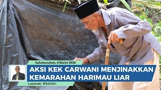 Download lagu Aksi Kakek 83 Tahun Taklukan Harimau Liar. Carwani Dikenal Sebagai Pawang Raja Hutan Dari Aceh