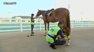 شرطة الخيالة تعود إلى شوارع أبوظبي