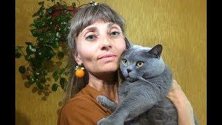 Жизнь и быт кота- сыроеда