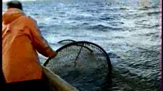 видео: Ловля дикой семги