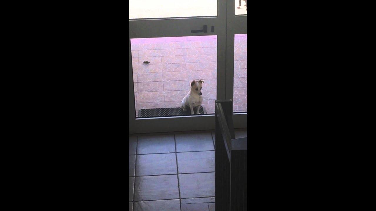 Cane cane che si guarda allo specchio youtube - Cane allo specchio ...