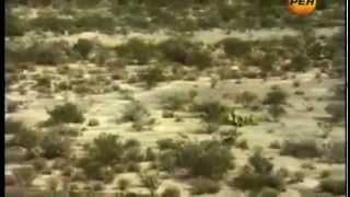 видео Зона молчания в Мексике
